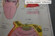 Schoolprent neus mond oog (2)