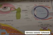 Schoolprent neus mond oog (achterzijde) (4)