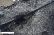 Koeienhuid zwart wit 220 x 220 9